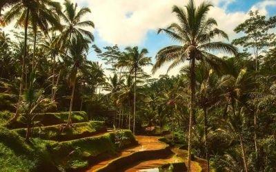 Digital Nomad hotspot Bali: waarom Bali zo populair is onder Digital Nomads